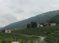Prosecco Weinstr IMG 7893
